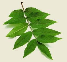 Tipos de arboles sus hojas y forma for Arboles frutales de hoja caduca