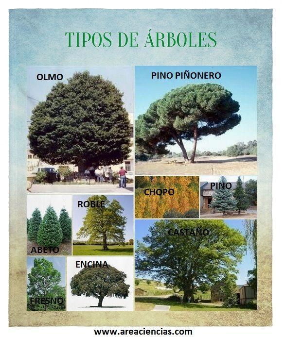 Tipos de arboles sus hojas y forma - Lista nombre arbustos ...