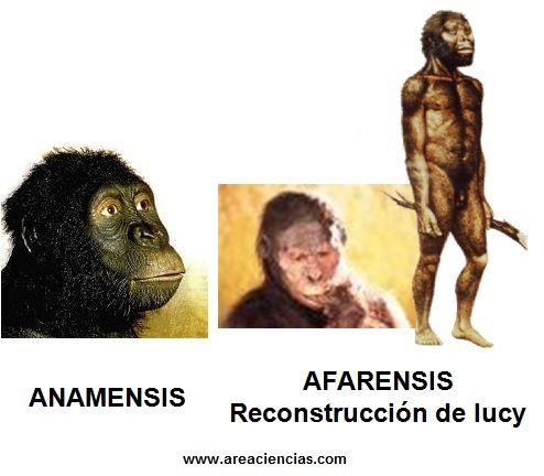 anamensis afarensis