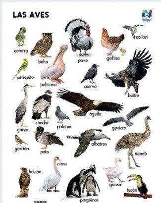 Tipos de Aves Caracteristicas y Qu Son