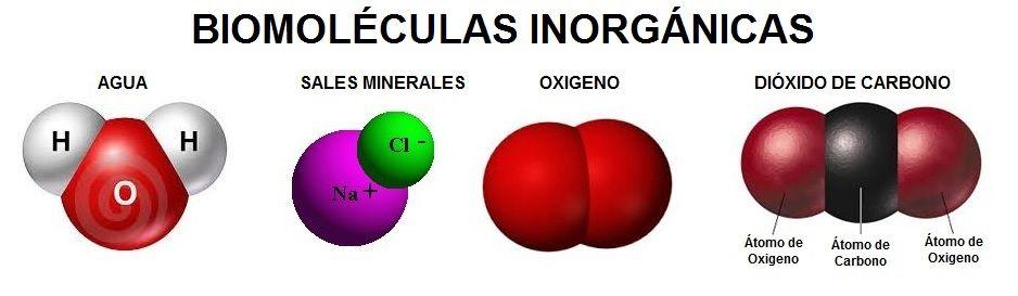 Resultado de imagen para Biomoléculas inorgánicas