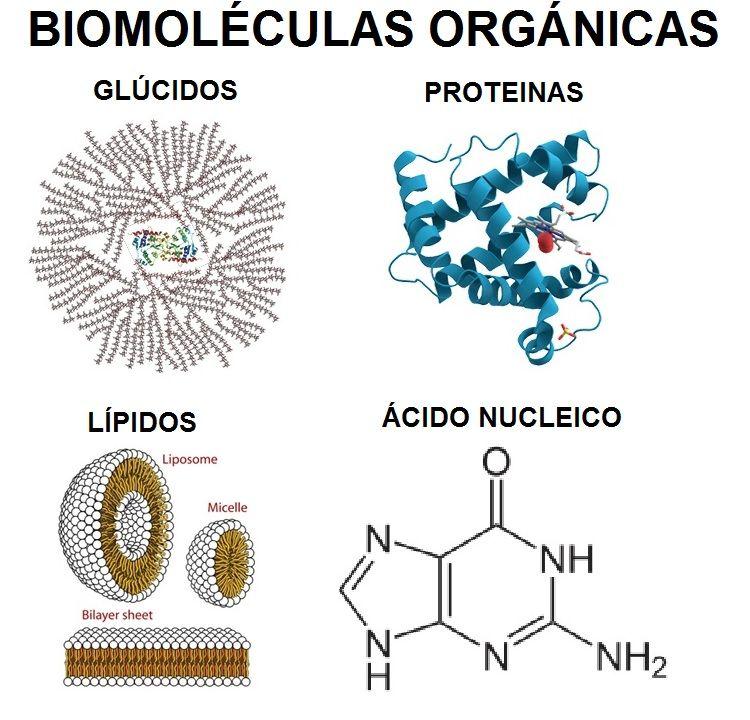 Resultado de imagen para Biomoléculas