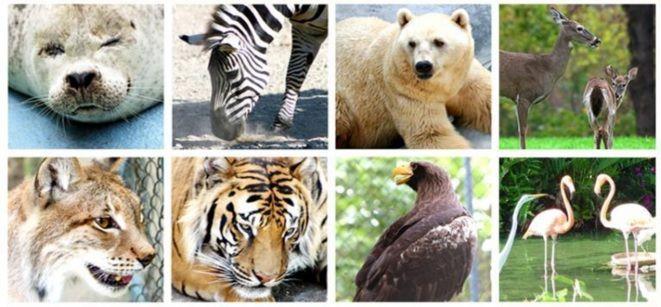 REINOS ANIMALES PDF DOWNLOAD