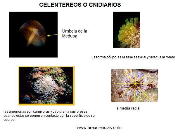Invertebrados Animales Invertebrados Aprende Facil