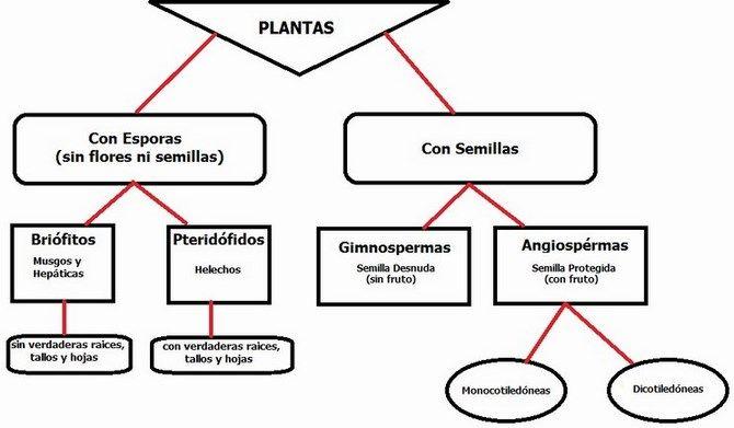 Clasificacion de las plantas como se clasifican for Clasificacion de las plantas ornamentales