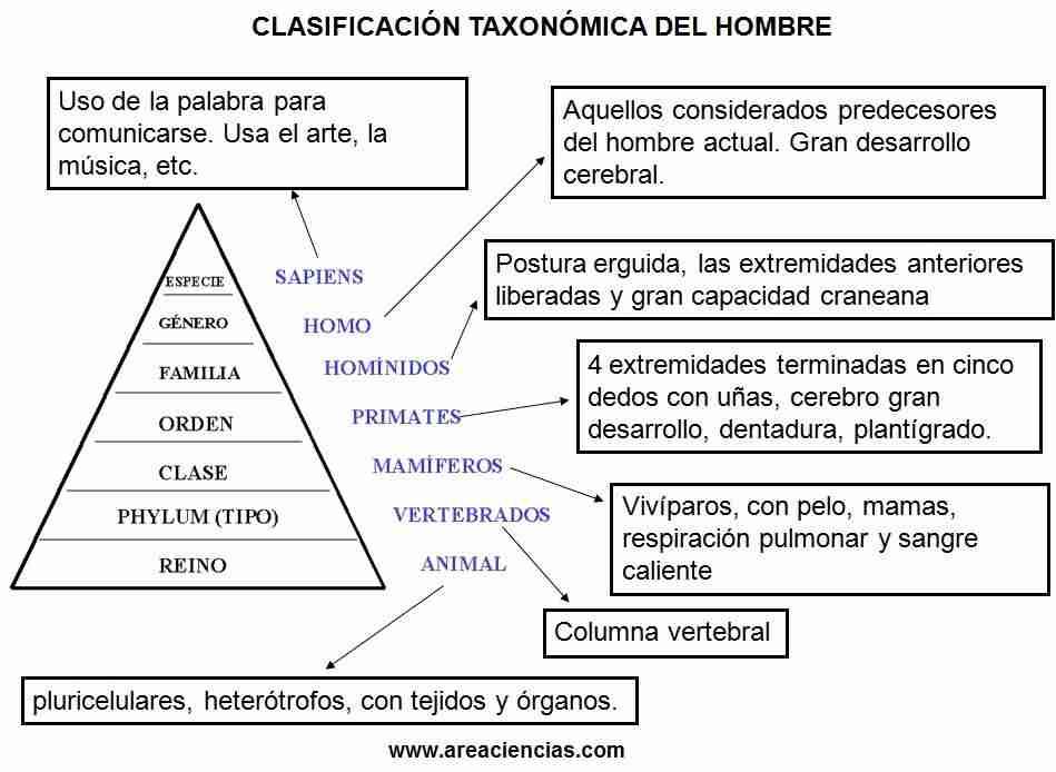 clasificacion taxonomica humanos