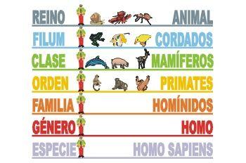 clasificacion taxonomica ser humano
