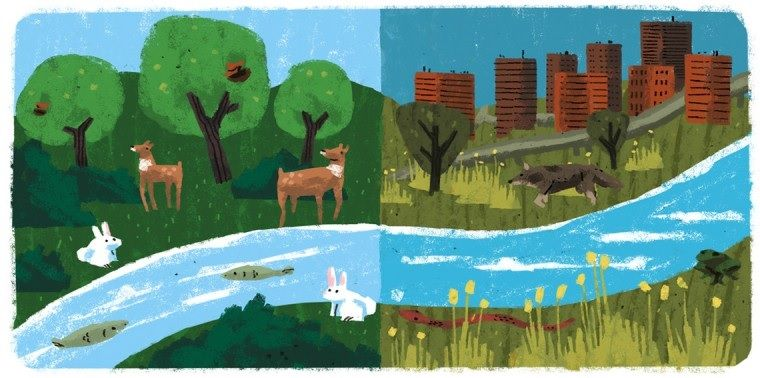 Ecosistemas Tipos de Ecosistemas y Conservacin de los Ecosistemas