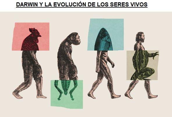 darwin evolucion de los seres vivos