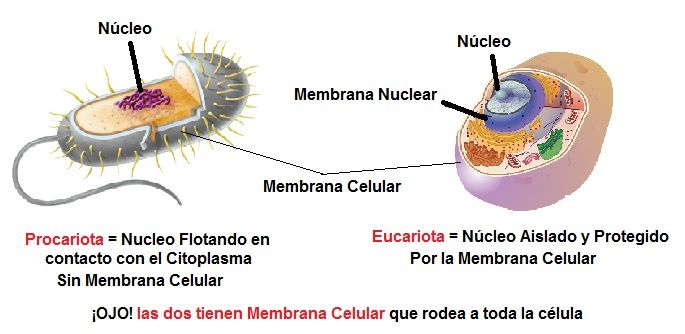 diferencia celula procariota y eucariota