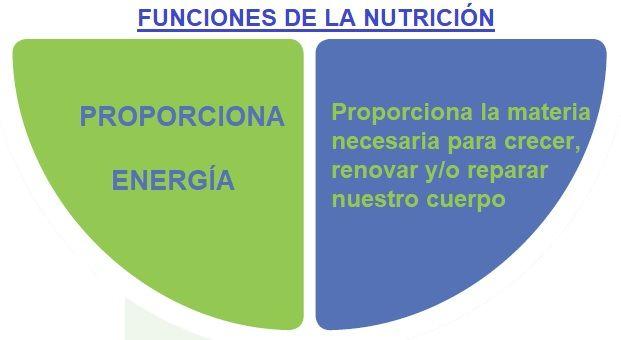funciones de nutricion