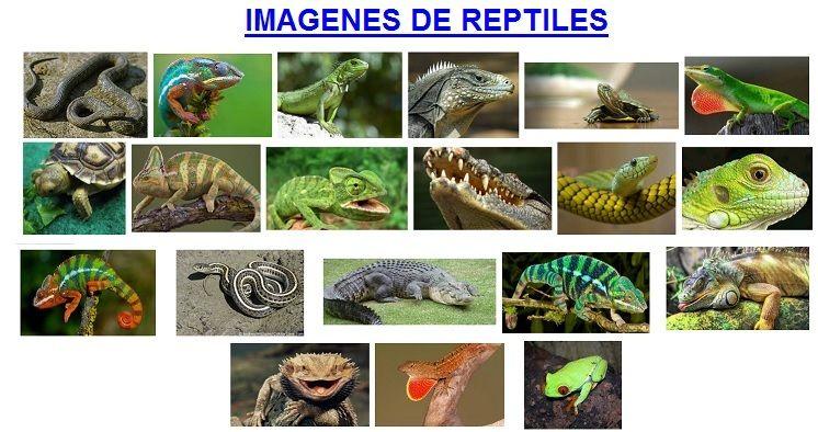 imagenes de reptiles