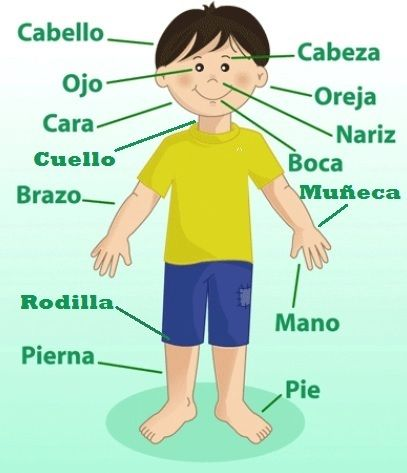 El Cuerpo Humano Para Niños Con Juego Interactivo