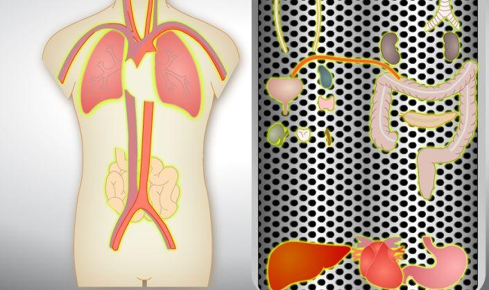 partes del cuerpo humano en ingles