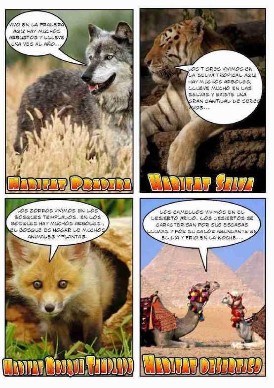 tipos de habitat para niños