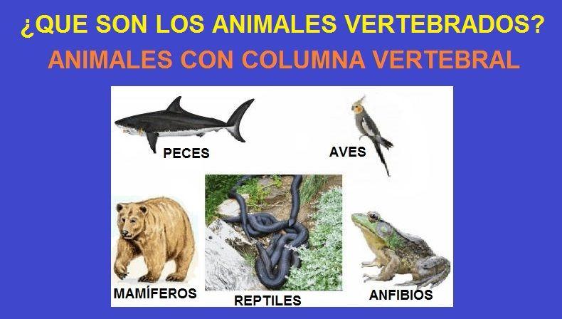 que son los animales vertebrados