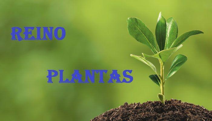 Reino De Las Plantas Todo Sobre El Reino Plantas