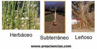tallos plantas
