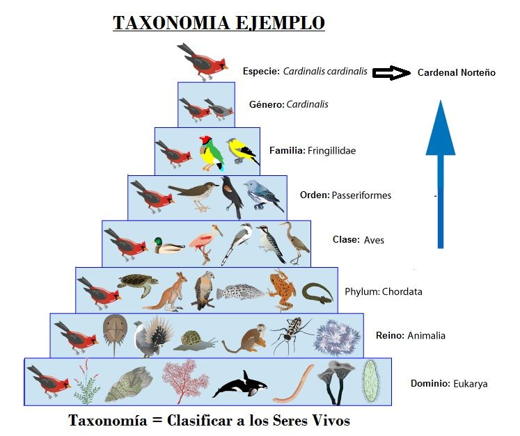 taxonomia animal