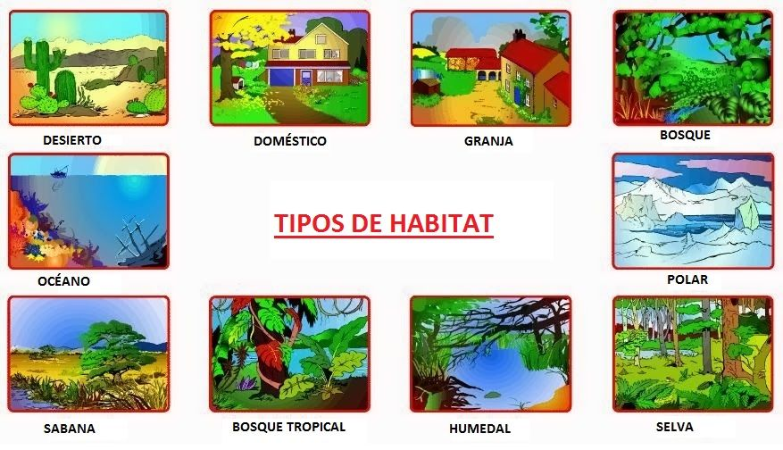 Que significa habitat y tipos de habitat aprende f cil - Different types of cuisines in the world ...