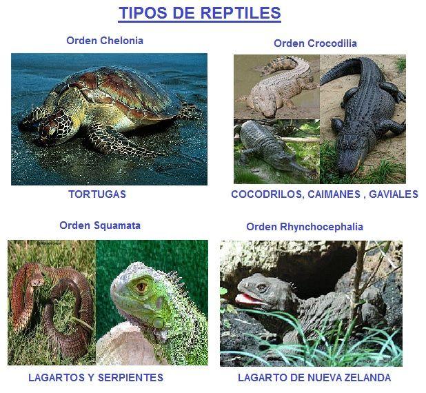Reptiles Tipos de Reptiles Imagenes Historia Reproduccin