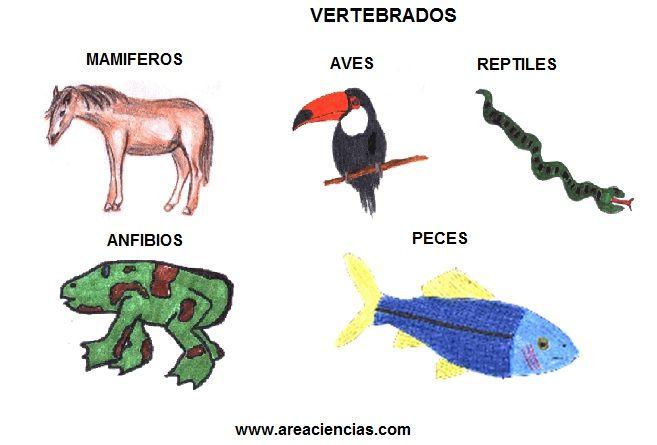 Los Animales Vertebrados Que son Tipos y Características