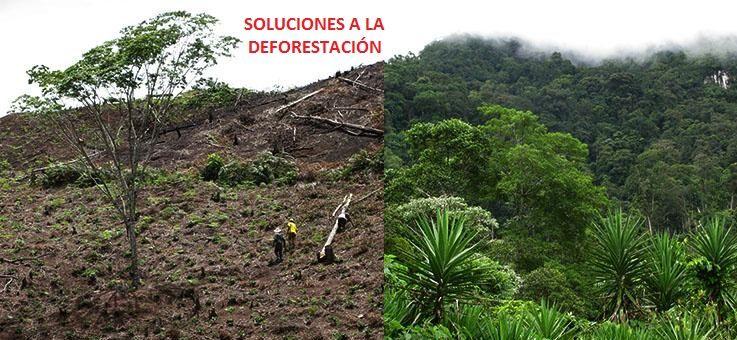 soluciones a la deforestacion