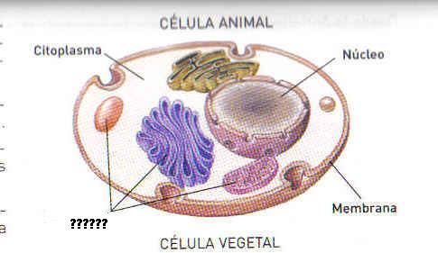 celula animal sin orgánulos.JPG