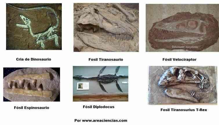 fosiles de dinosaurios