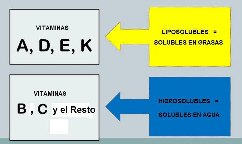clasificacion de las vitaminas