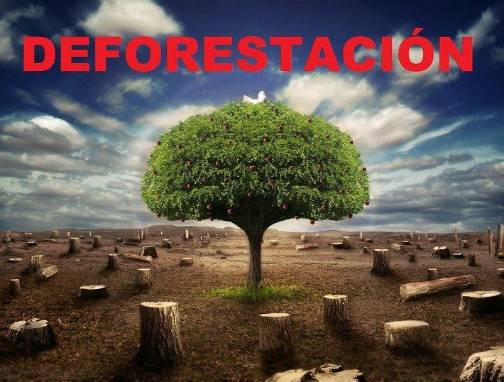 Deforestaci n qu es causas y consecuencias de la deforestaci n soluciones - El hombre que cambio su casa por un tulipan ...