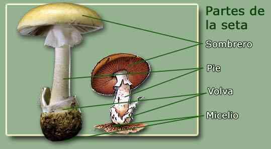 Los preparados exteriores del tratamiento del hongo de las uñas