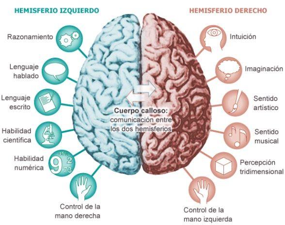 funciones hemisferios cerebrales