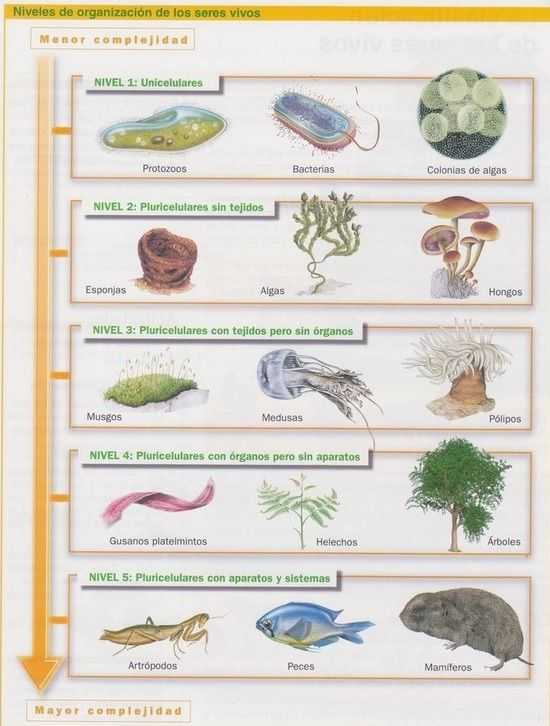 niveles de organizacion de los seres vivos