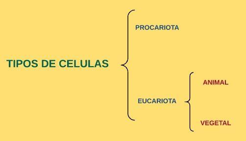 Definicion de celula eucariota vegetal y animal