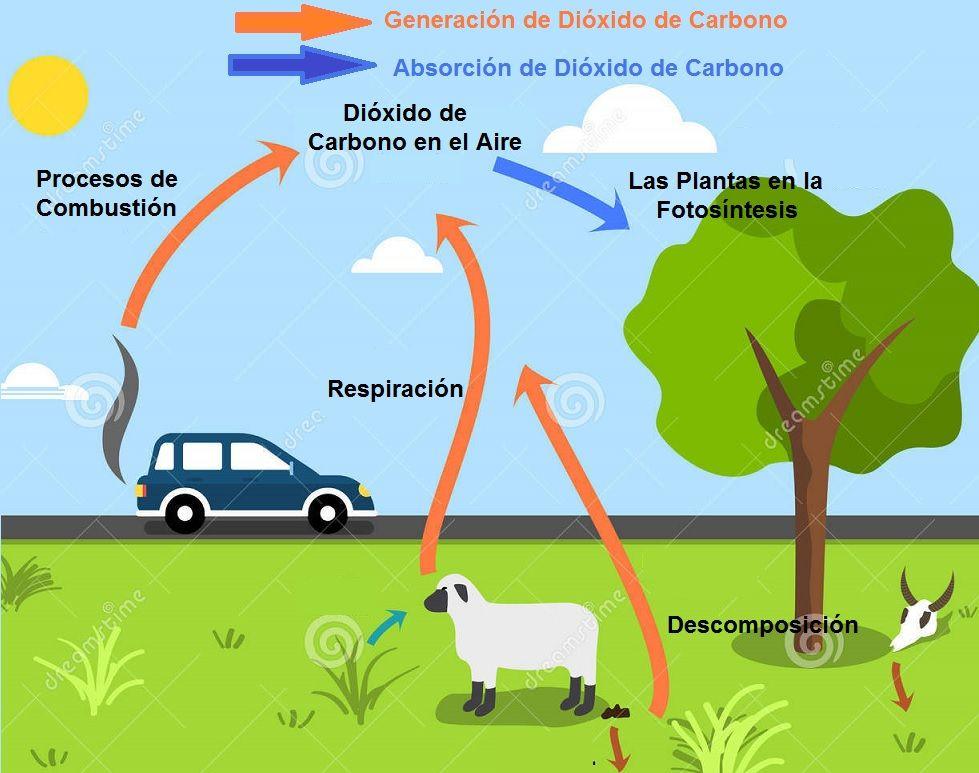 como se genera el dioxido de carbono
