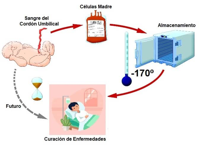 almacenamiento de células madre